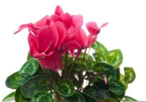 Благодарността на цветята