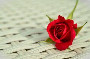 Едно цвете означава – ти си всичко за мен!