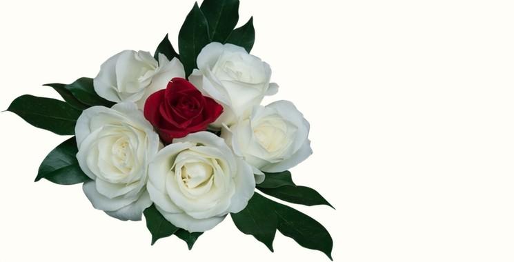 траурни цветя
