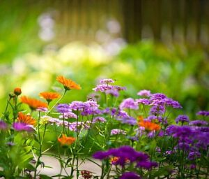 Фактът, че растенията влияят на здравето ни е бил забелязан още в Античността.