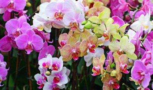 Орхидея – символ на естетиката и творческото начало