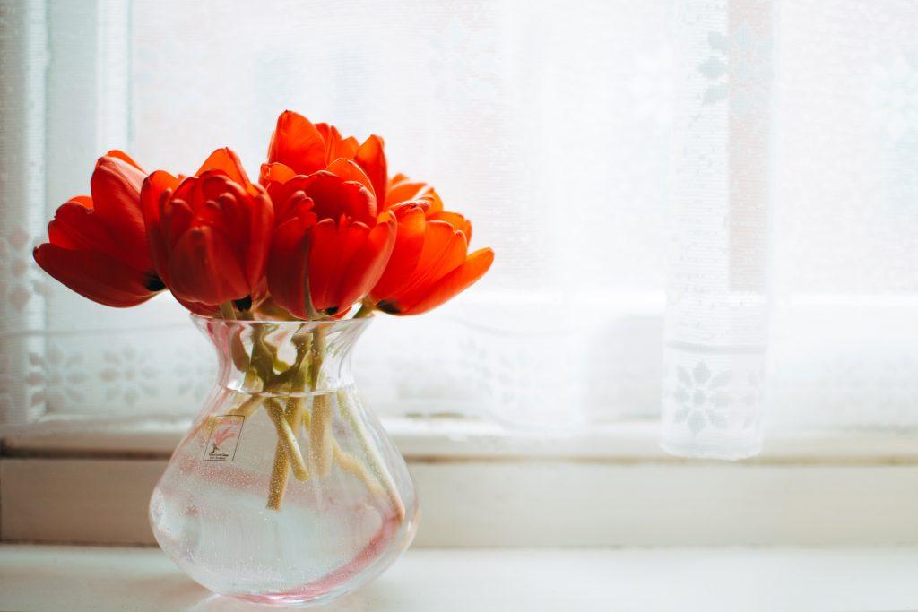 Лалетата са едни от най-обичаните пролетни цветя и често красят вазите вкъщи. Снимка: © PEXELS
