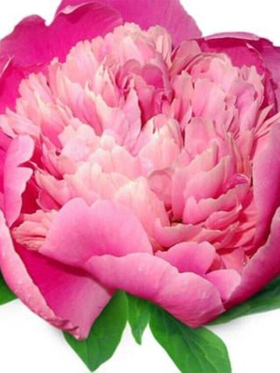 Цветя & Букети
