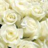 НЕЖНО ОБЯТИЕ & Бели рози