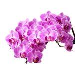 Избери букет с орхидеи