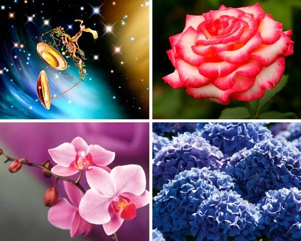 Изводите на астролозите относно съвместимостта на зодиакалните знаци и цветя ще ви помогнат да направите избор, когато купувате букет за роднини или приятели