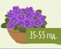 Живи цветя в саксия.
