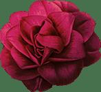Cvete4U - Flowers shop